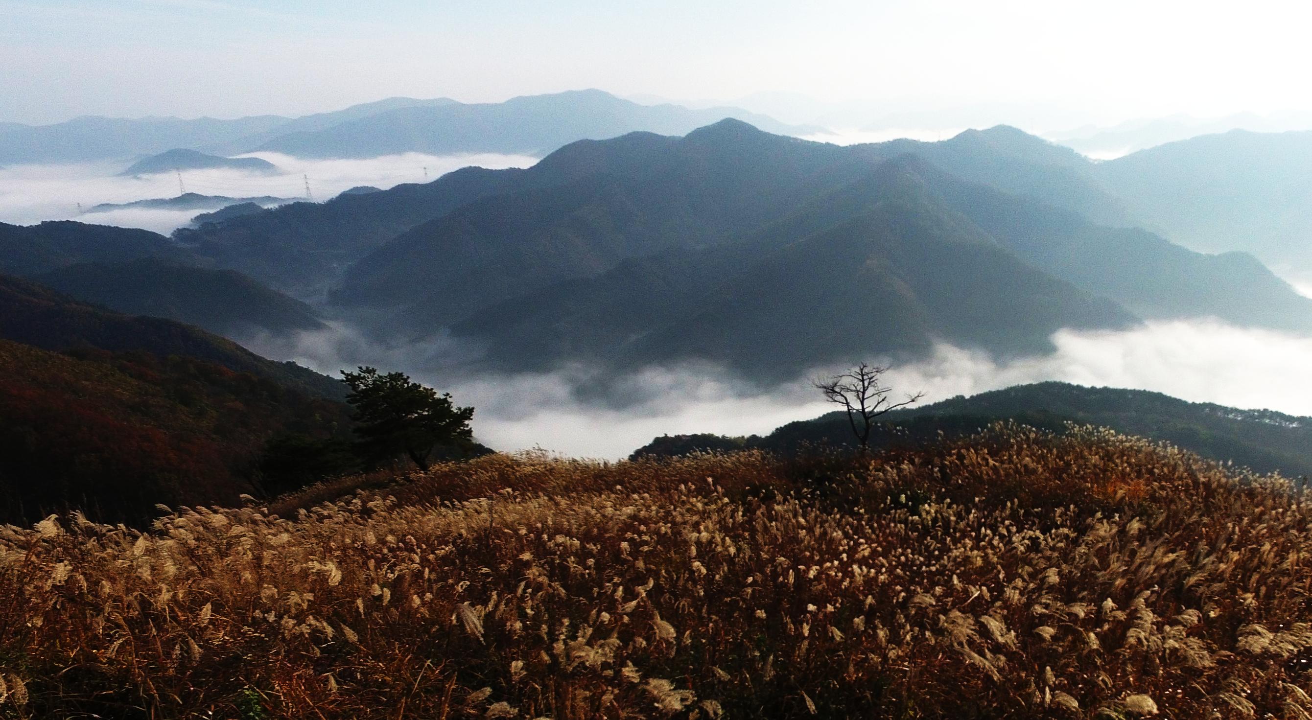 민둥산 억새  - 김영부