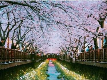 벚꽃은 진해 벚꽃축제!! 진해군항제 근처 맛집리스트